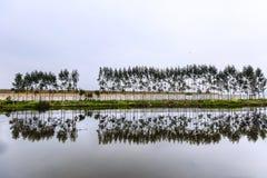 Reflexion av träd i sjön Royaltyfria Foton