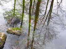 Reflexion av träd i vattnet royaltyfria bilder