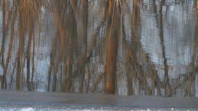 Reflexion av träd utan sidor i vatten arkivfilmer