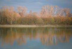 Reflexion av träden i floden Arkivbild