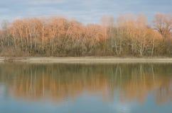 Reflexion av träden i floden Arkivfoton