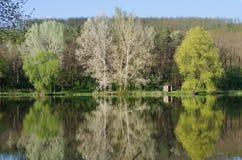 Reflexion av träden i sjön Royaltyfria Foton