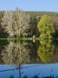 Reflexion av träden i sjön Royaltyfria Bilder