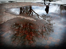 Reflexion av trädet i pöl av vatten efter Sorm arkivfoton