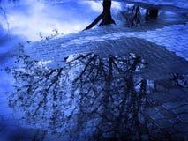 Reflexion av trädet i pöl av vatten efter Sorm arkivbild