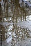 Reflexion av trädfilialer i en pöl royaltyfria bilder