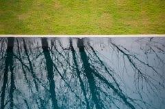 Reflexion av treen Arkivfoton