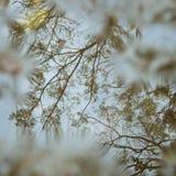 Reflexion av treen Arkivbilder