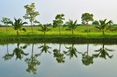 Reflexion av trees. Arkivbilder