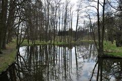 Reflexion av trees Arkivfoton