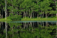 Reflexion av trees i en lake Royaltyfri Foto