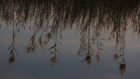 Reflexion av växter i vattnet arkivfilmer