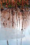 Reflexion der Anlagen auf Wasser Lizenzfreie Stockbilder