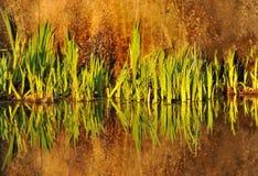 Reflexion der Anlagen im Wasser Stockbild