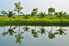 Reflexion der Bäume. stockbilder