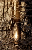 Reflexion der Bäume im See Lizenzfreies Stockbild