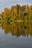 Reflexion der Bäume im See Stockfoto