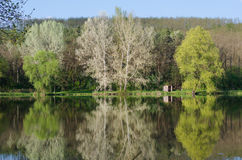 Reflexion der Bäume im See Lizenzfreie Stockfotos
