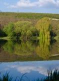 Reflexion der Bäume im See Stockbilder