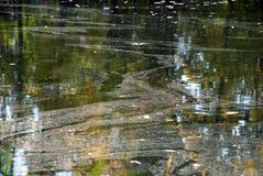 Reflexion der Bäume im Wasser Stockfotos