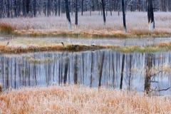 Reflexion der gebrannten Bäume im kalten Wasser Lizenzfreie Stockfotografie