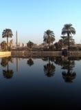 Reflexion der Palmen Stockfotografie