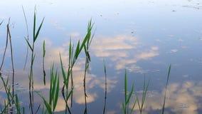 Reflexion der Wolken im Wasser stock video
