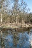 Reflexion des Barkenwaldes im Wasser Lizenzfreie Stockfotos