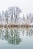 Reflexion des Baums im Wasser im Winter Stockbild