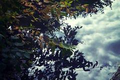 Reflexion des bewölkten Himmels und der Niederlassungen auf ruhigem Wasser Lizenzfreies Stockbild