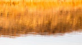 Reflexion des gelben Grases auf dem Wasser als Hintergrund Stockfotos