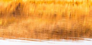 Reflexion des gelben Grases auf dem Wasser als Hintergrund Lizenzfreies Stockbild