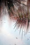 Reflexion des Grases auf Wasser Stockbild