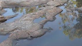 Reflexion des Himmels und des Eukalyptus in tröpfelndem Wasser auf rosa Granit stock footage