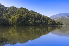 Reflexion des Waldes im See lizenzfreies stockbild