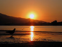 Reflexion des Wassers, des Seestrandes und des Vogels Stockfotografie