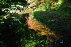 Reflexion in einem Wasser Stockbilder