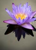 Reflexion einer Blume Lizenzfreie Stockfotografie