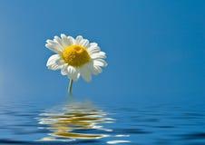 Reflexion einer Blume stockbild