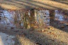Reflexion eines Baums Stockbild