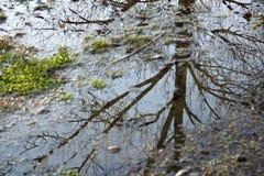 Reflexion eines Baums Lizenzfreies Stockbild