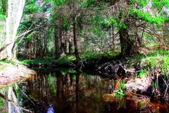Reflexion eines Baums in einem Fluss Stockfotos