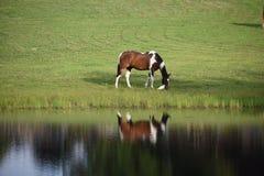 Reflexion eines Pferds lizenzfreie stockbilder