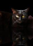 Reflexion för svart katt Arkivfoton