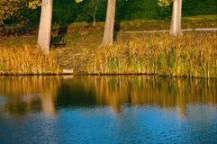 reflexion för 3 träd Arkivbild