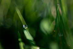 Reflexion i en droppe av drow Arkivbild