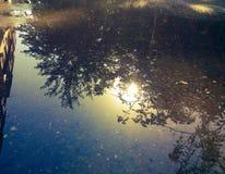 Reflexion i en pöl Arkivfoton