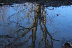Reflexion i en pöl Arkivbilder