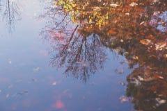 Reflexion i laken Royaltyfria Foton