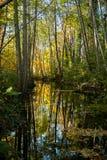 Reflexion i lugna vatten Royaltyfria Bilder